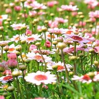 flower-meadow200.jpg